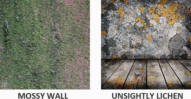 Mossy wall and lichen example